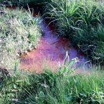 Nascente d´ água registrada no C. Politécnico, localizada próximo ao Banco Itaú